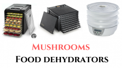 Best Dehydrator for Mushrooms