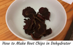 beet chips dehydrator