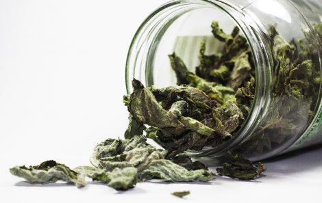 dried mint herb