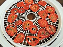 Tray of Dried Tomatoes